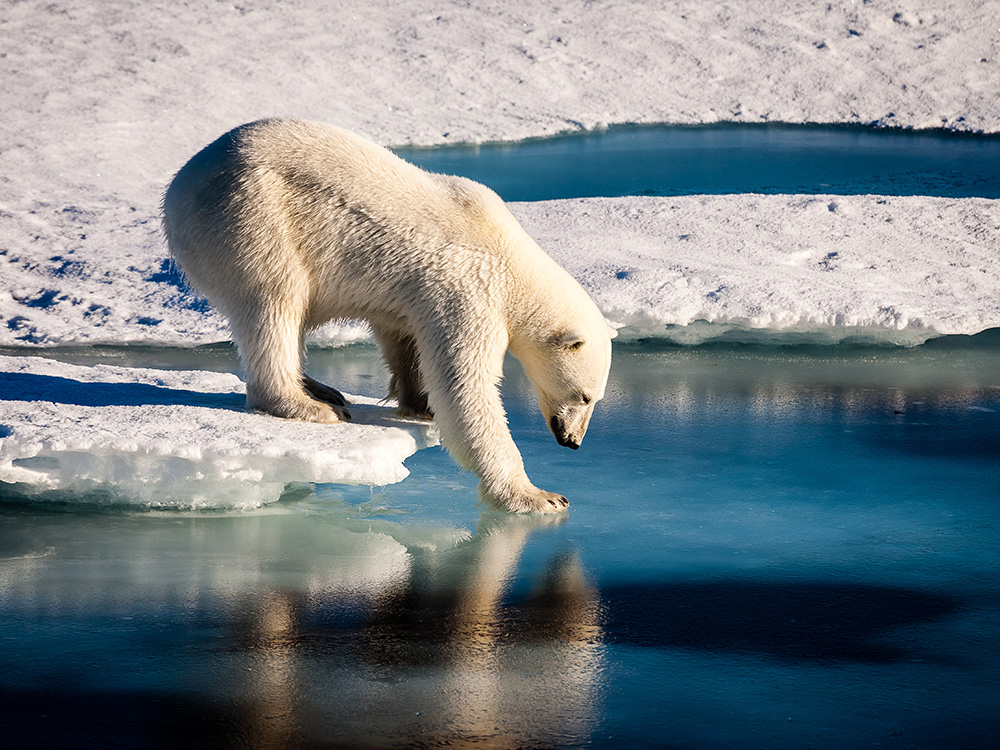 Lindblad Expeditions : inviting guests to learn facts about the ice vessel and science of polar region exploration